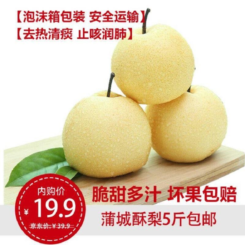 【现摘现卖】蒲城酥梨 5斤