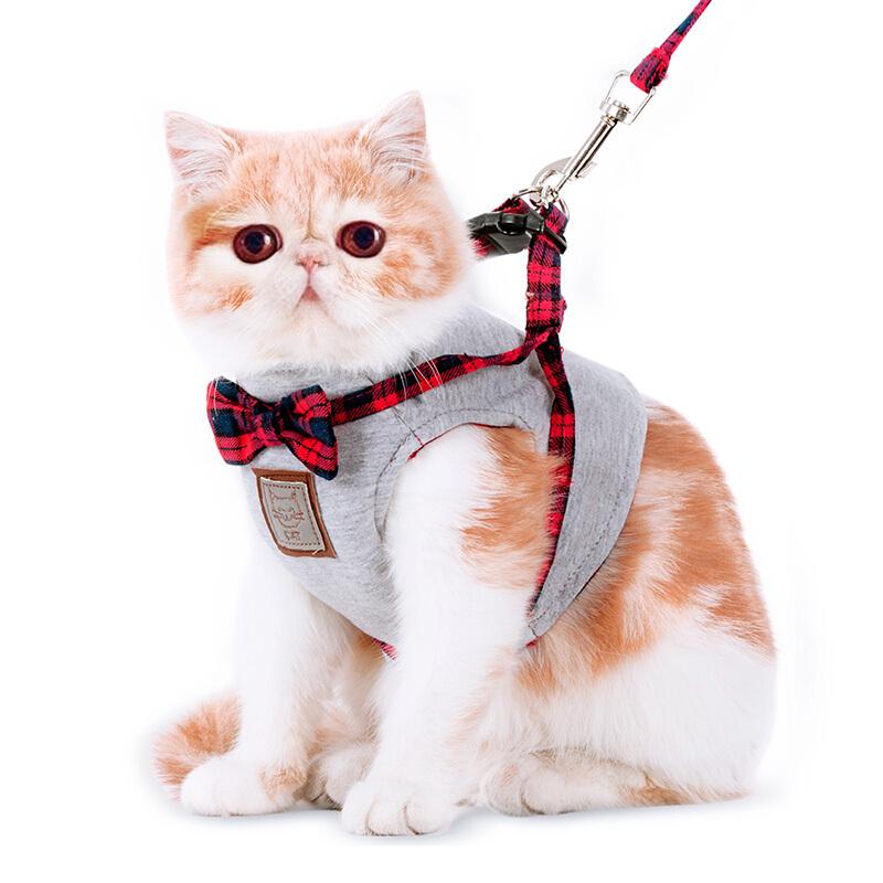 小猫绳的套法步骤图解