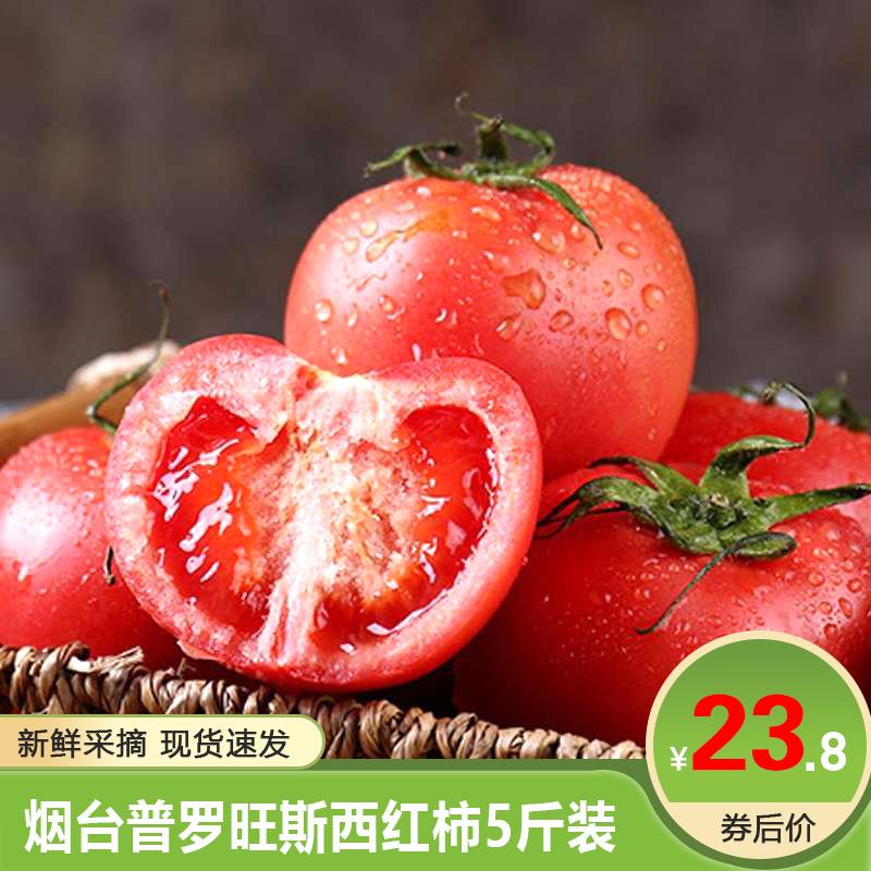 【绿色蔬果】古寨山 烟台普罗旺斯西红柿 5斤