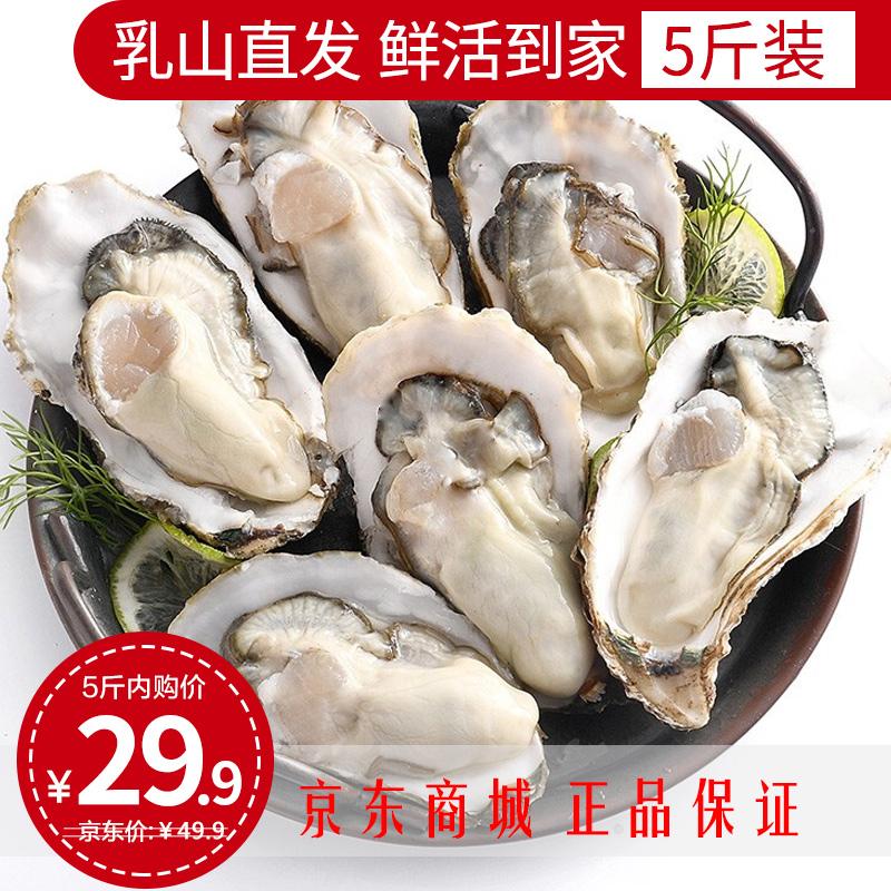 【乳山直发】乐食港 正宗乳山生蚝 M号(5斤净重4斤)约38-42个