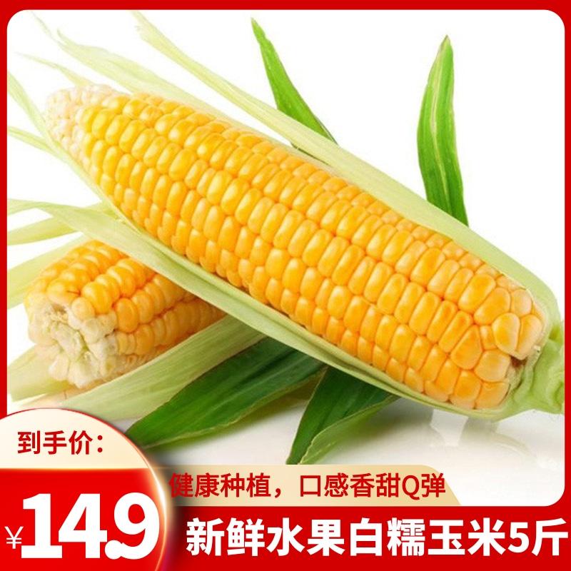 新鲜白糯水果玉米 5斤装